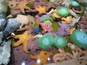 Touch pool at Oregon Coast Aquarium